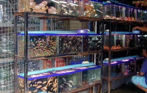 Fish Aquarium at Chatuchak Weekend Market